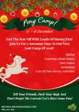 Shepherd's Fold 2 Day Christmas Pony Camp Lanseria Horse Riding Classes & Lessons 4