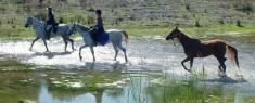 Father's Day Trail adventure ride. Lanseria Horse Riding Classes & Lessons _small