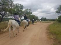 Ponies, Ponies, and more Ponies Lanseria Horse Riding Classes & Lessons 4 _small