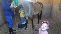 Mini Pony Camp for the Little Ones Lanseria Horse Riding Classes & Lessons 3 _small