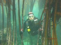 Buy 2 open water courses and get discounted rate Kommetjie Diving Classes & Lessons 4 _small