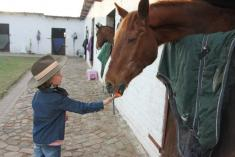 2 Day Pony Camp Lanseria Horse Riding Classes & Lessons 3 _small
