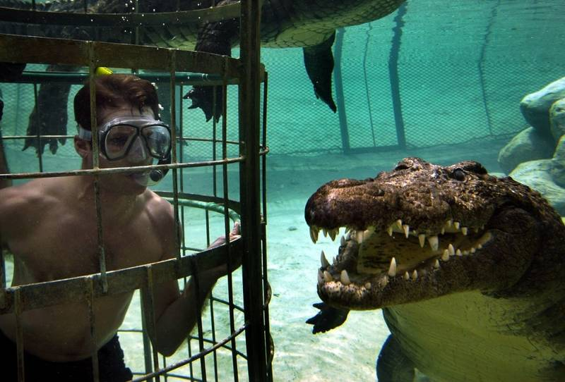 World' first Crocodile Cage Dive
