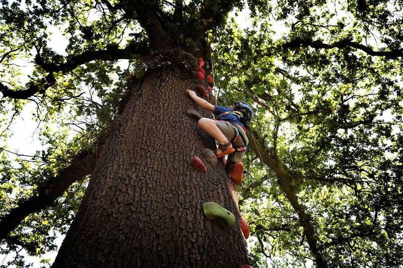 tree climb!