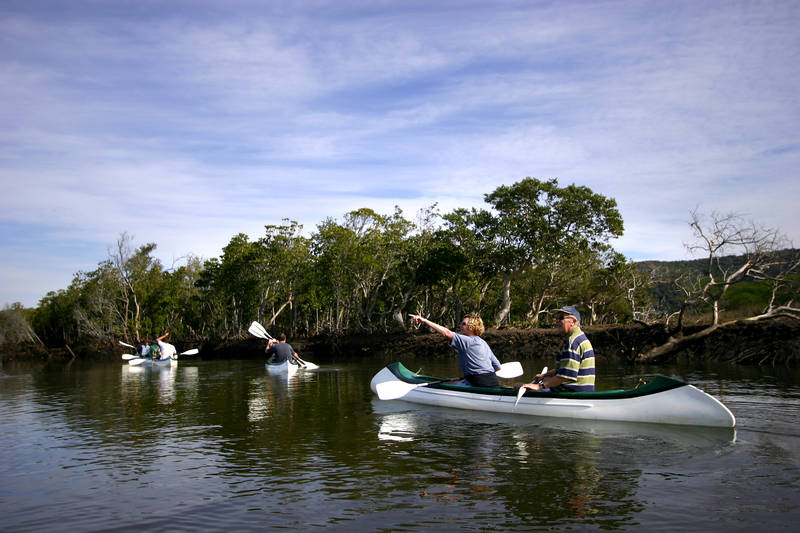Paddling up the river on Mangroves tour