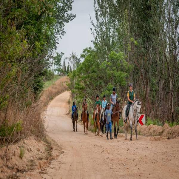 Shepherd's Fold 2 Day Christmas Pony Camp Lanseria Horse Riding Classes & Lessons 1