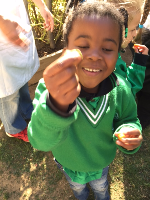School Excursions - yummy veggies straight from the veggie patch