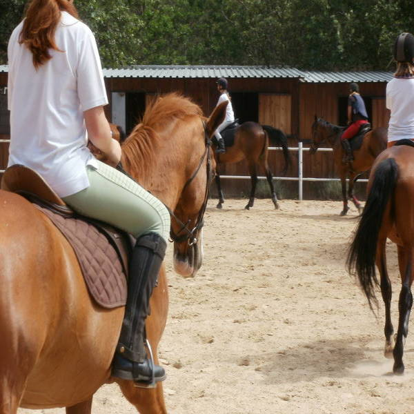 Pay half price for your first month of lessons Chartwell Horse Riding Classes & Lessons 3